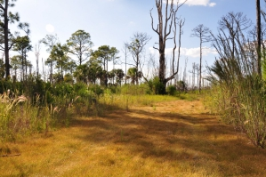 Estero Bay Preserve State Park