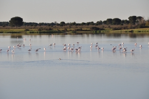 Flamingo's in El Rocio