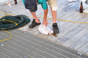 Golf van Mexico - vissen