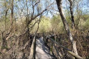Nationaal Park Donana wandeling naar Palacio