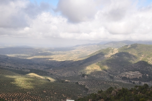 Olijfbomen in Andalusie