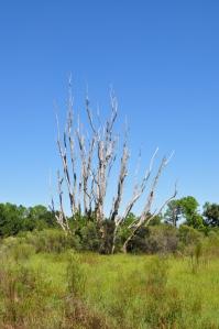 Prairie Pines Preserve