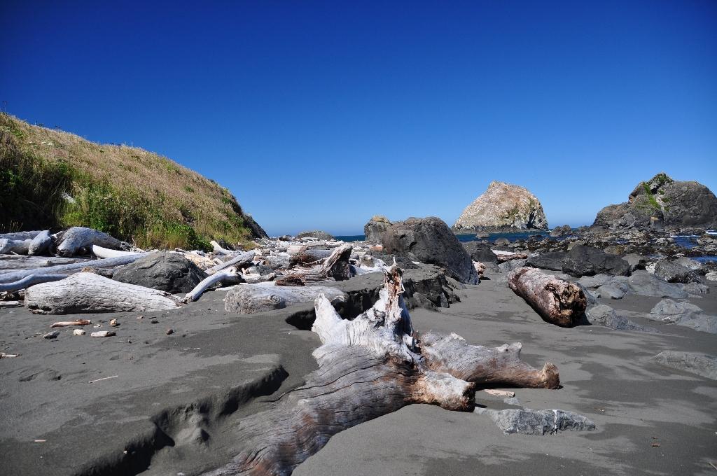 Redwoods op het strand