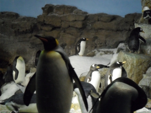 SraWorld - Penguin Encounter